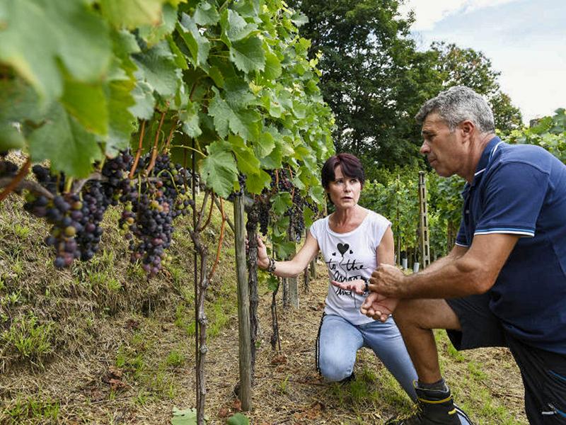Quelles formations pour être viticulteur?